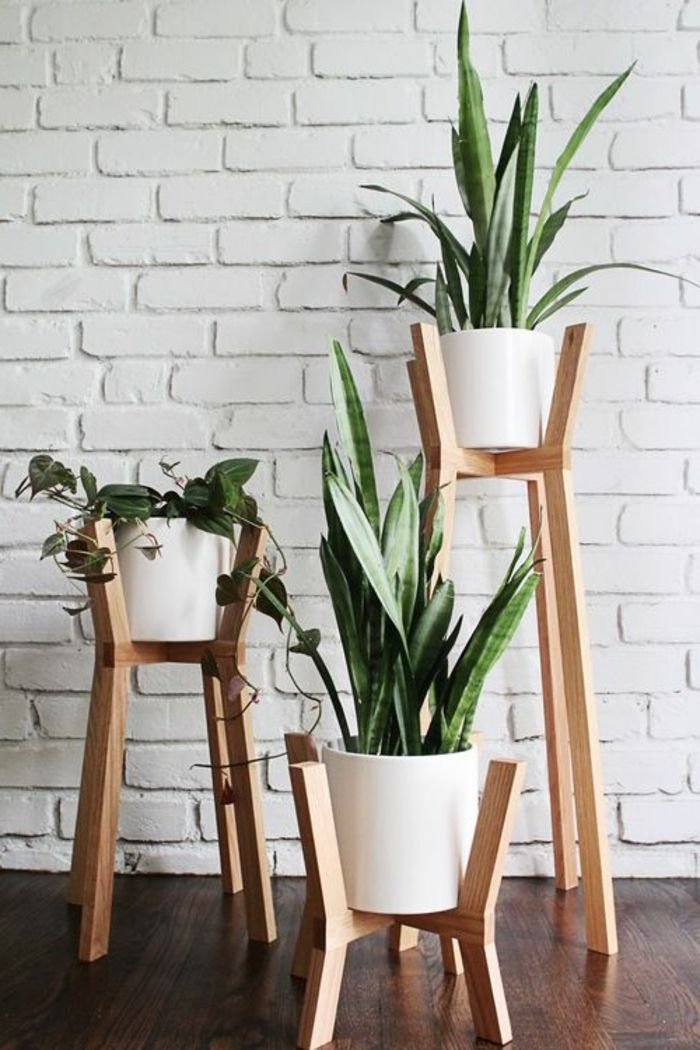 support plante