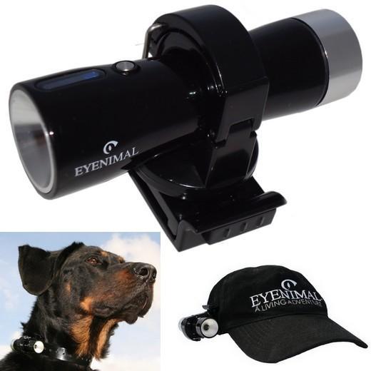 camera chien