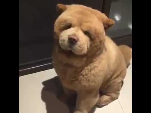 chien ourson