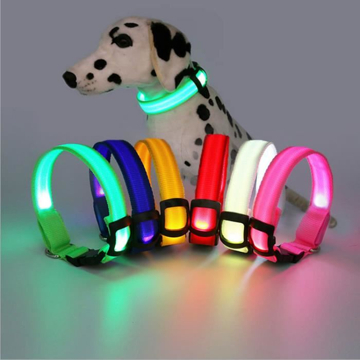 collier chien lumineux led