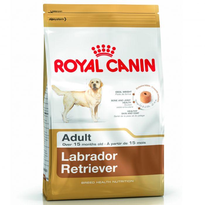 croquette labrador