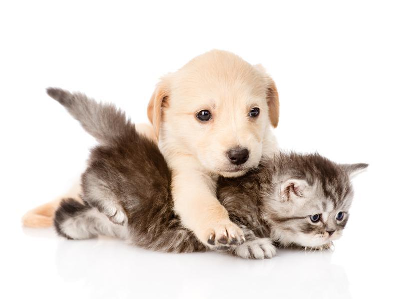 pour chien et chat